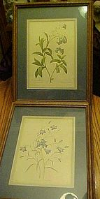 Pair of framed  matted Botanical prints by  P J Redoute