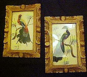 Vintage pair of framed bird pictures, real feathers